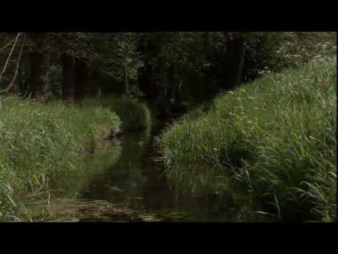 Spreesinfonie - 3.Satz - Spreewald (Ausschnitt)