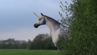 Are Unicorns Real?Unicorns Caught on Tape & Spotted In Real Life!Proof of Real Unicorn Found .... with an Iggy twist ;)From footage of a supposed unicorn in England, today we take a look at the most mysterious unicorn footage ever to be caught on tape. Unicorns are one of history's most elusive mythical creatures. But maybe they are more than just a myth.--In dating and leisure circles, a Unicorn is referred to as a mythical lover imagined in your mind, too delightful and perfect to exist in real life. The slang term parallels the common conception of the unicorn, or one-horned horse or rhinosaurus, as a purely fictional animal.But can we be sure? The first writings on unicorns were recorded in Greek natural history, not myth. Unicorn spotting was popular in the Middle Ages. The Greeks did not envision the Earthly unicorn as we do, or as any type of dainty pure-white flying Pegasus. Instead, Aristotle referred to the unicorn as a type of one-horned antelope. Like most other Greek philosophers and scientists, Aristotle saw India as the natural habitat of these strange beasts. This documentary footage, shot in Uzbekistan in Central Asia, shows a type of bull with a prominent, devilish center horn shaped like that of a story-book unicorn. The eyewitnesses pull the horn and demonstrate that it is no plastic prop. Unicorns Caught on Tape (BEST UNICORN SIGHTINGS)