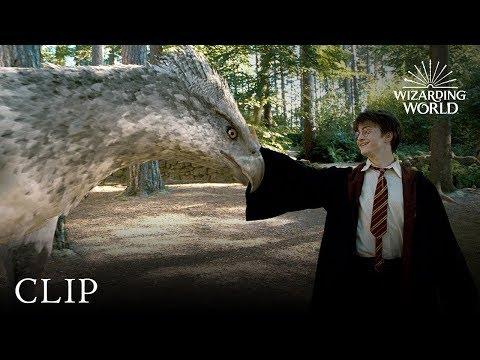 Meet Buckbeak | Harry Potter and the Prisoner of the Azkaban