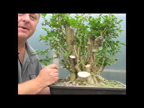 Bonsai - Getting Something From Nothing!