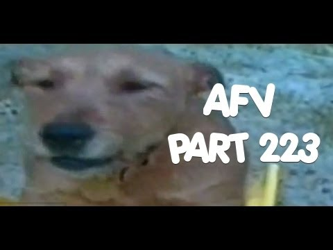 ☺ AFV Part 223 America's Funniest Home Videos (Funny Clips Fail Montage Compilation) | OrangeCabinet
