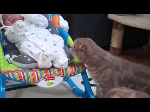 gatti incontrano per la prima volta un neonato!