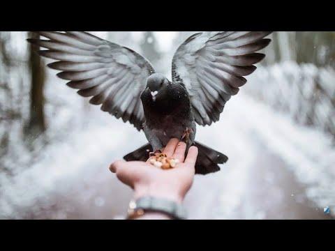 «Свет православия». 26.07.20. 794 выпуск.