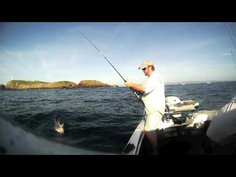 Live Baiting, North Coast NSW