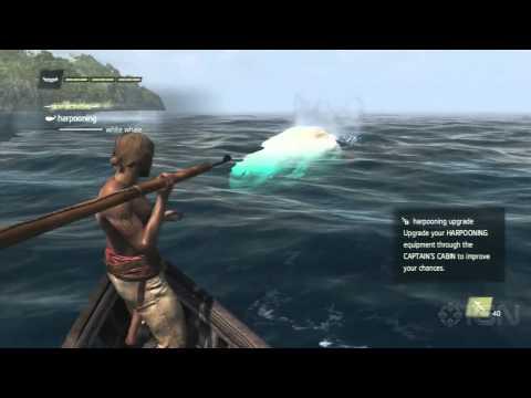 как найти в ассасине 4 белого кита видео