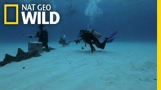 The Hammerhead Invasion Begins | Monster Fish by Nat Geo WILD
