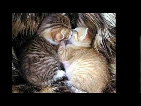 Moi vouloir être le chat - Pow wow.wmv