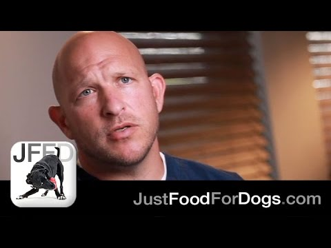 The Specialists: How does fresh prepared food help dogs? | JustFoodForDogs