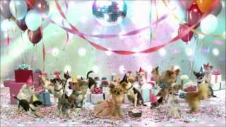 Beverly Hills Chihuahua 3  Viva La Fiesta! 2012   Teaser Trailer 1080p