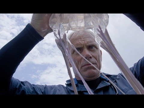 Death Down Under - How to Catch a Box Jellyfish