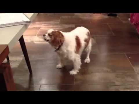 Rudess family pets