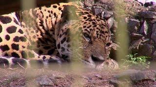 Zoológico de Sorocaba trabalha na conservação de espécies ameaçadas de extinção