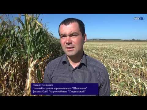 Уборочная компания в сельхозпредприятиях Волковысского района
