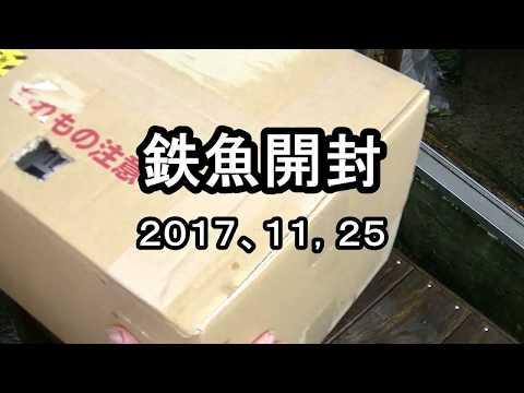 鉄魚開封動画、