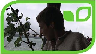 Balkonfreuden: Südliche Pflanzen auf Sabine Rebers Balkon