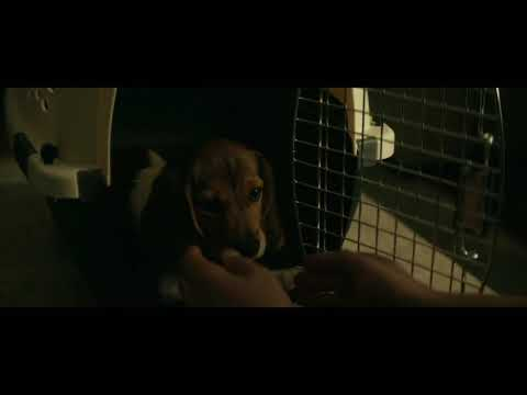 John wick with his dog.(HD 1080p)