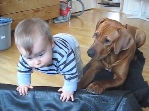 狗狗發現小主人努力往自己的床爬上去玩時,牠接著做的暖心之舉就是你絕對不能棄養牠的原因!