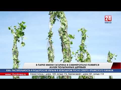В парке имени Гагарина в Симферополе высадят аллеи тюльпанных деревьев и установят новые скамейки