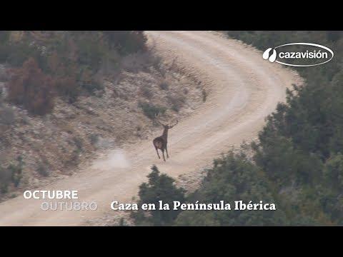Octubre 2017: Caza en la Península Ibérica
