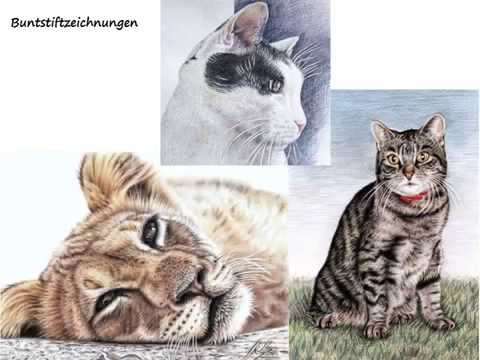 Katzen Zeichnen mit Nicole Zeug – Drawing Cats by Nicole Zeug