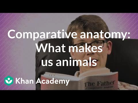 Comparative Anatomy What Makes Us Animals Video Khan Academy