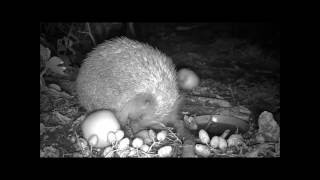 Wildlife Trail Camera - 24.8.2016