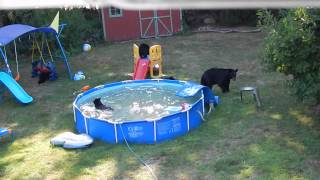 Rockaway (NJ) United States  city photos : A bear family takes a dip in our pool - Part II