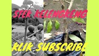 Video BaRu TeKniK PeRbAnYAKaN KleNgKeNg MP3, 3GP, MP4, WEBM, AVI, FLV Desember 2018
