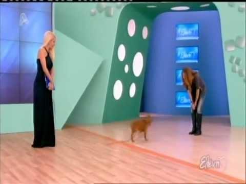 Πως μπορούμε να εκπαιδεύσουμε σωστά το σκύλο μας (A)