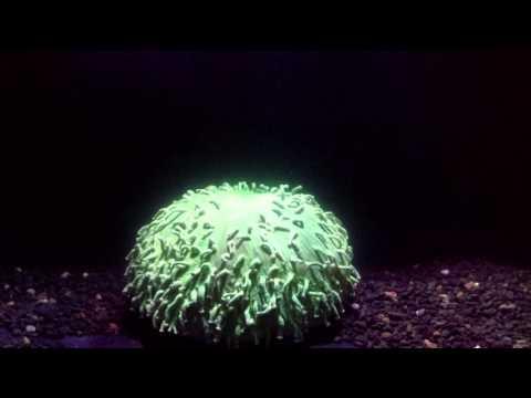 Gedrag van verblekend koraal op video vastgelegd