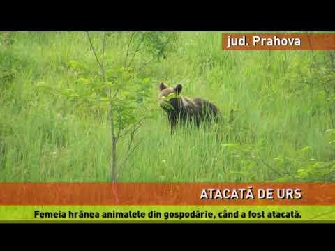 Femeie atacată de un urs, într-un sat din Prahova