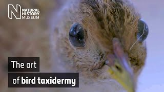 Colour in the collections: bird taxidermy