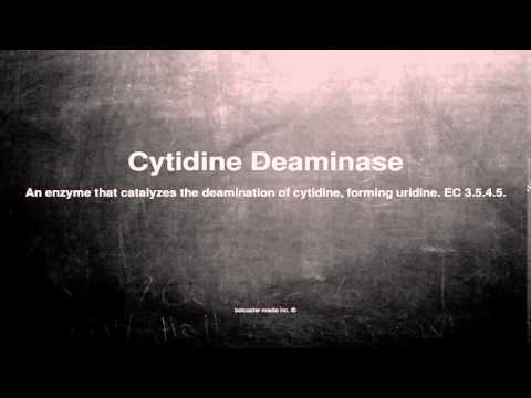 Medical vocabulary: What does Cytidine Deaminase mean