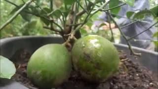 Video INDAHNYA BERBAGI Part 5 Cara Mengaplikasikan Nature Stek Perangsang Bunga & Buah MP3, 3GP, MP4, WEBM, AVI, FLV Juli 2018
