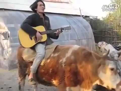 """cưỡi bò cover """"Baby""""....clip khó đỡ nhất mà t từng xem :)))"""