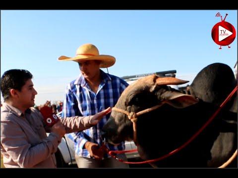 Cavalgada em Farol foi um sucesso
