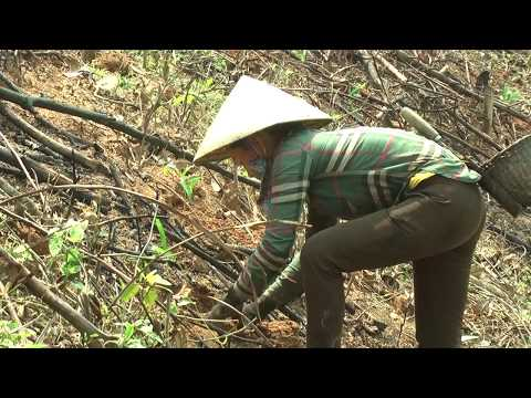 Quỳ Hợp phấn đấu hoàn thành kế hoạch trồng 1.500ha rừng năm 2018