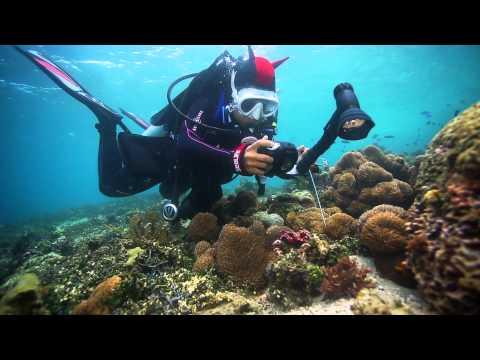 SeaLife Underwater Cameras | Diving Indonesia with SeaLife Underwater Cameras, Lights and Lenses_Merülő helyek. Legeslegjobbak