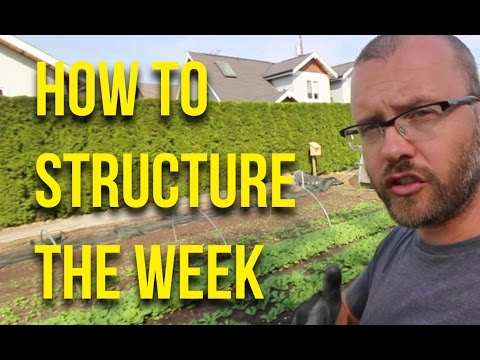 HOW TO: Structure the week