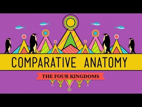 Anatomy - Hank introduces us to comparative anatomy, which studies the similarities and differences in animal anatomy to support the theory of evolution and the shared...
