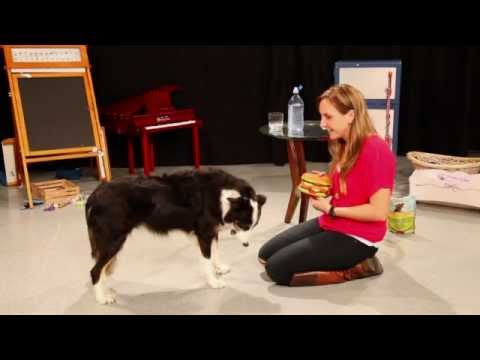 Amazing and Funny Dog Tricks by The Amazing Leroy
