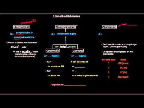 Lipids (Part 9 of 11) - Membrane Lipids - Sphingolipids