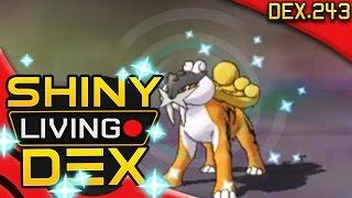 EPIC SHINY RAIKOU REACTION! Live! Quest For Shiny Living Dex #243 | Pokemon ORAS by aDrive