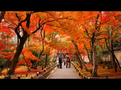 京都秋艶 autumn colors momiji leaves in Kyoto Japan  紅葉