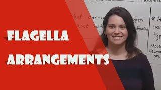 Flagella Arrangements