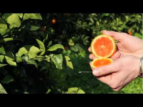 i benefici salutari delle arance rosse di sicilia!
