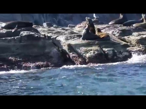 Sea lions, Meditation, fragment of  fusion improvisation, Andrei Krylov  music