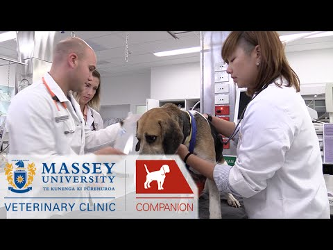 Clinical Spaces I Behind the scenes at Massey Vet School