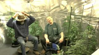 Taken A Closer Look Cannabis Cancer Chronic Pain by John Berfelo