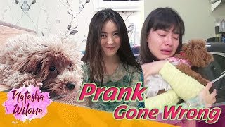Video Prank Sahabat Sendiri Sampai Nangis! PRANK GONE WRONG!!! MP3, 3GP, MP4, WEBM, AVI, FLV April 2019